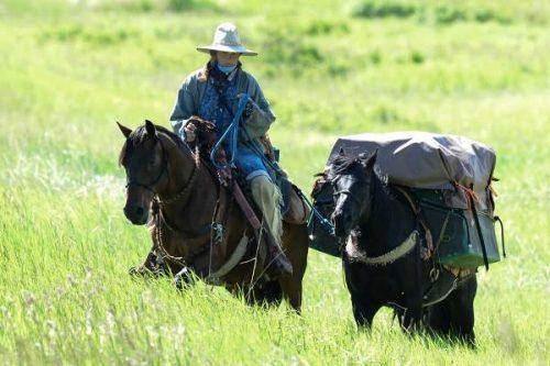 horse travel