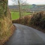 Irish Hedgerows
