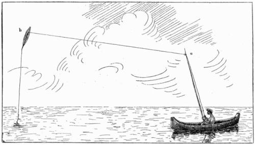 moluccan kite-fishing