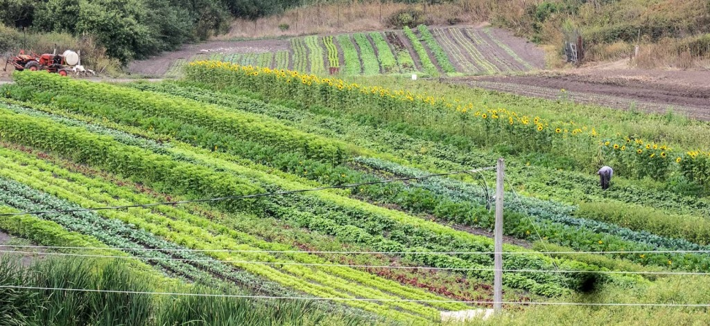 the beauty of organic farming picture by Lloyd Kahn