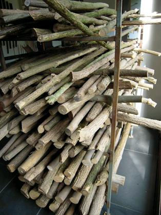 drying branches for making flutes